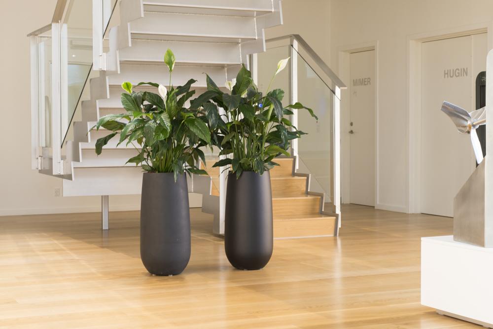Alfa Laval, Fredslilje, sorte krukker, Spathiphyllum, luftrensende planter,