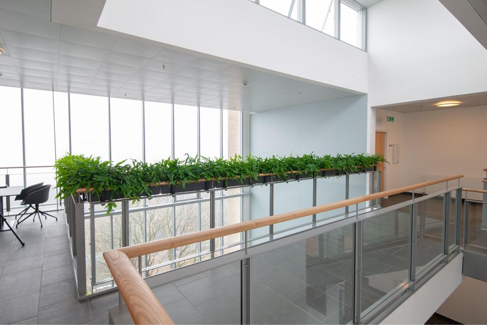 hængende haver, altankasser, Planter, trapper