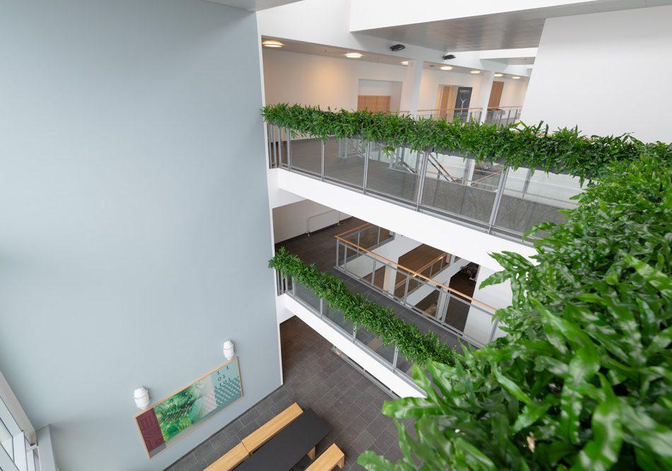 hængende haver, planter, altankasser, trapper,
