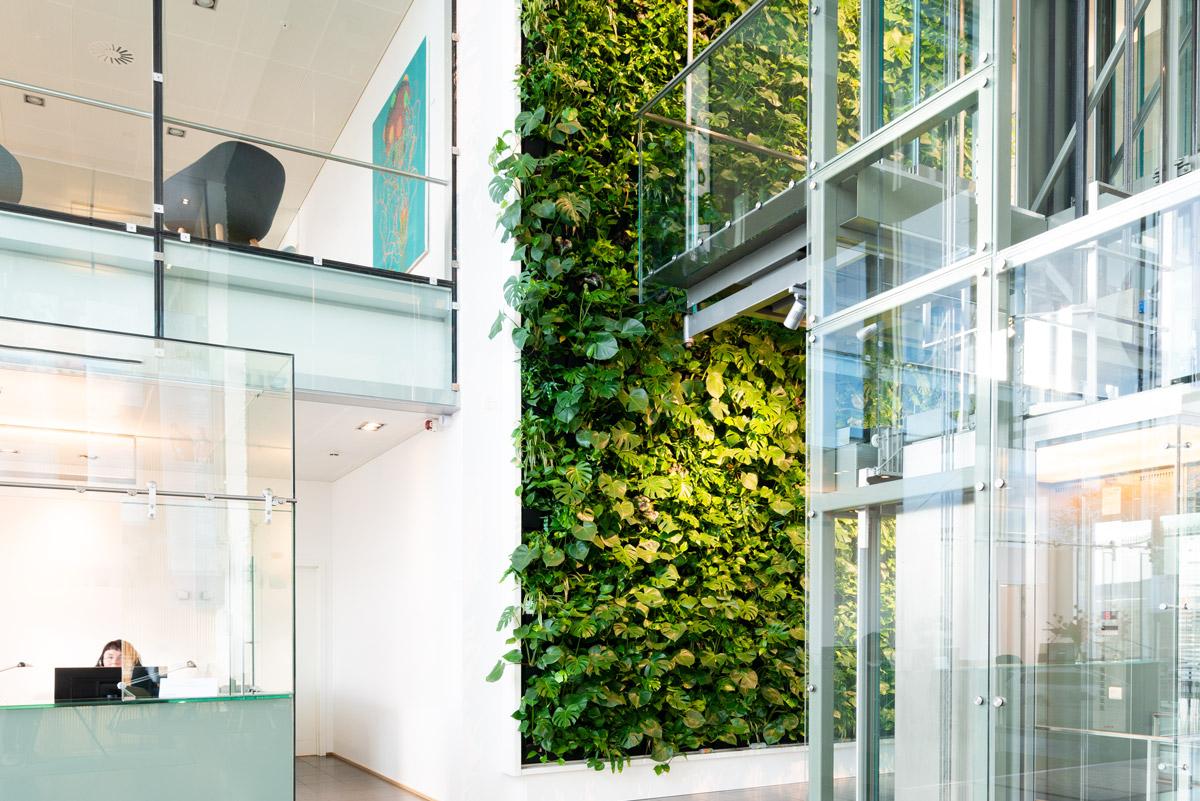 grøn plantevæg,