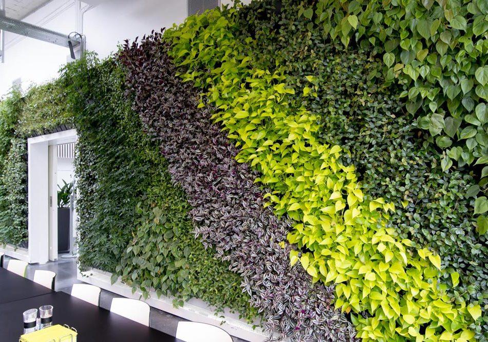 plantevæg, grøn væg,