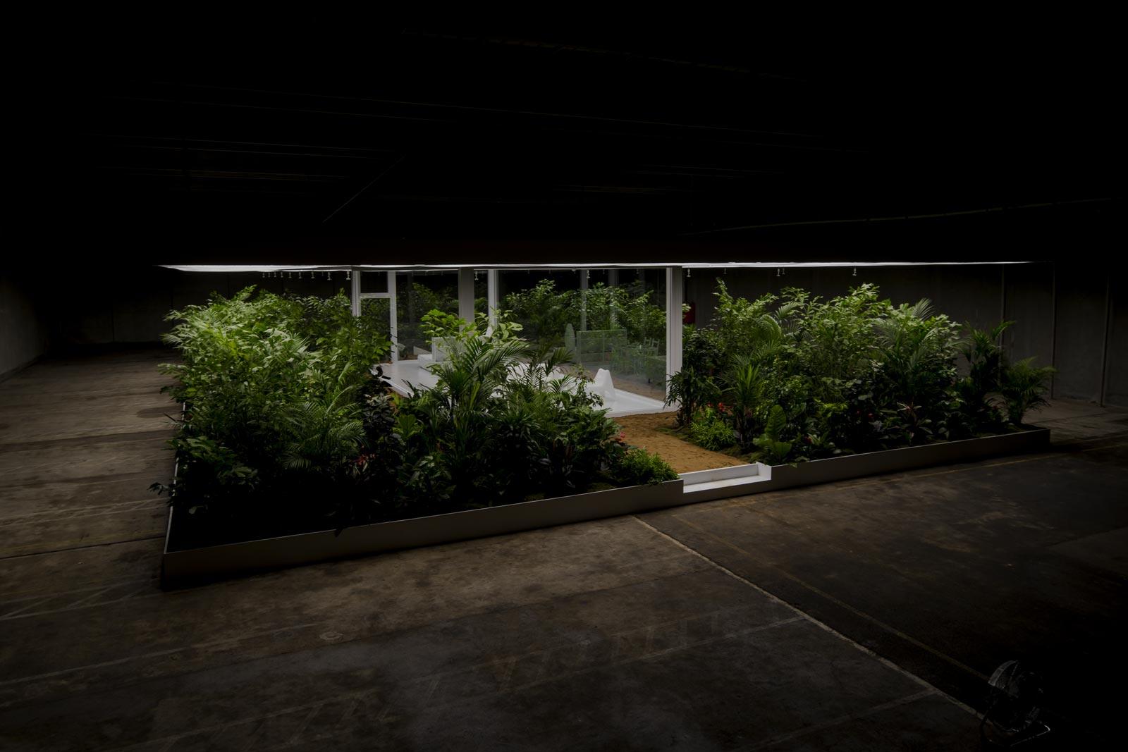 Indendørs plantemiljø. grønne planter,