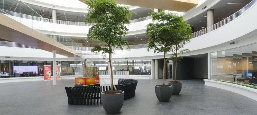 Atriumgård, Oliven,