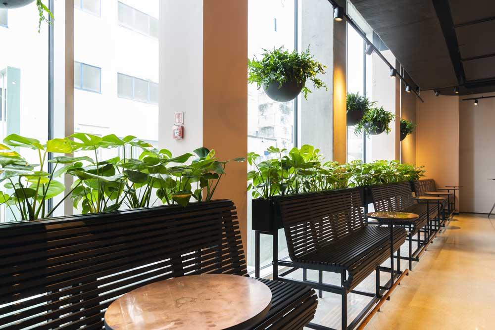 Grønne planter, Monstera, Ampler, bænke, Scandic kødbyen, planteservice, planteservice København, planteservice aarhus
