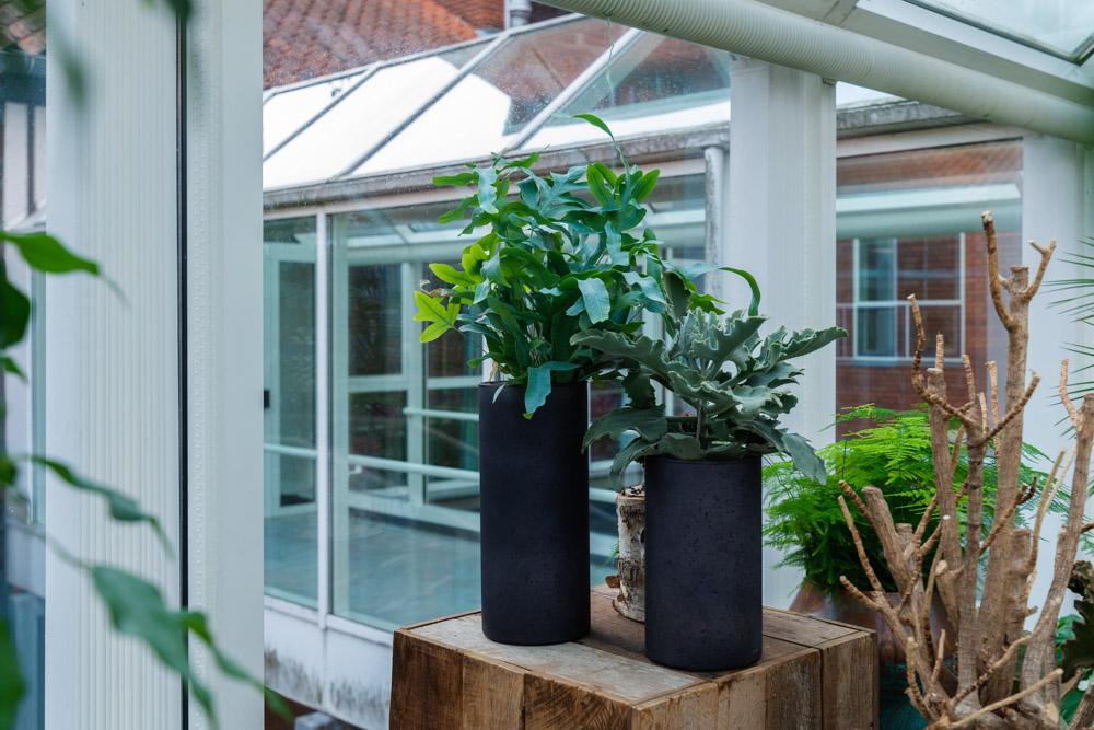 Grønne planter, luftfugtighed, gummi planter,