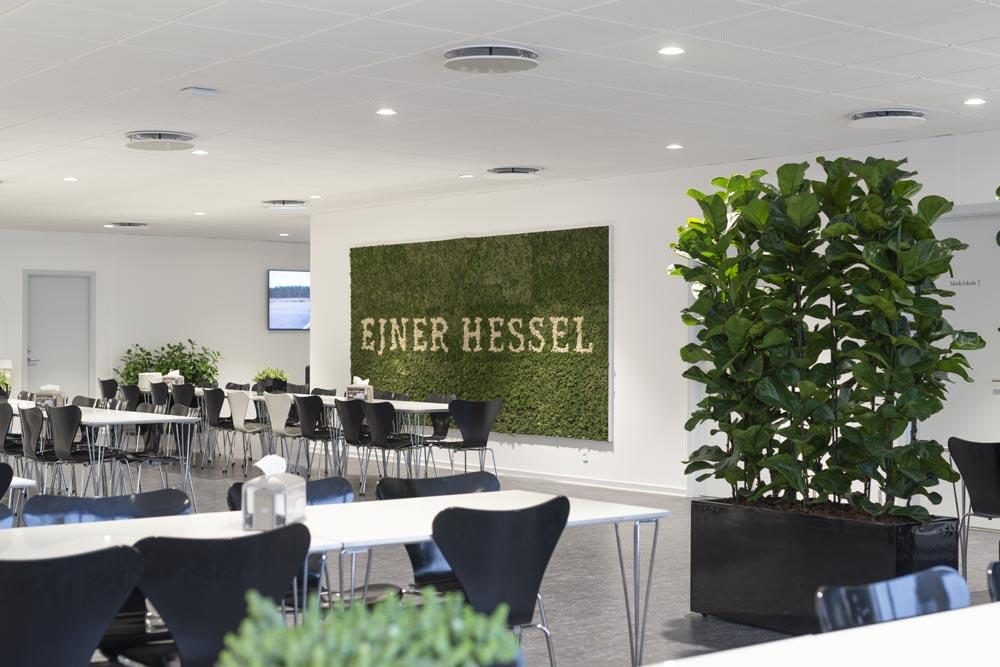 Mosvæg, Ficus lyratam kantine, Ejner Hessel,