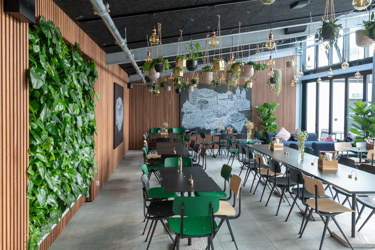 Plantevæg, salling, planteservice, planteservice København