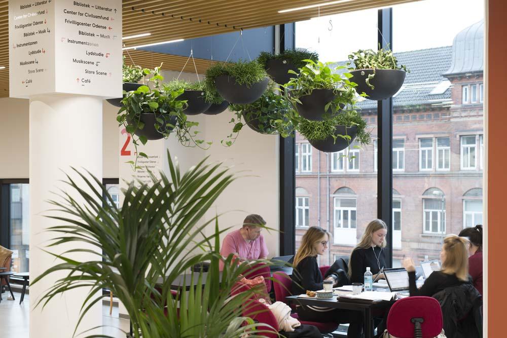 Planteservice på Fyn, Fyns Planteservice, Hængende planter, luftfugtighed,