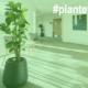 planter og lys, guide, Plantetips_skabelon