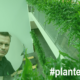luftfugtighed, planters trivsel, plantetips