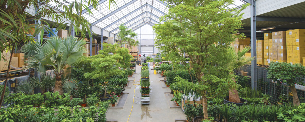 Indendørs træer, træer, store træer, træer til indretning
