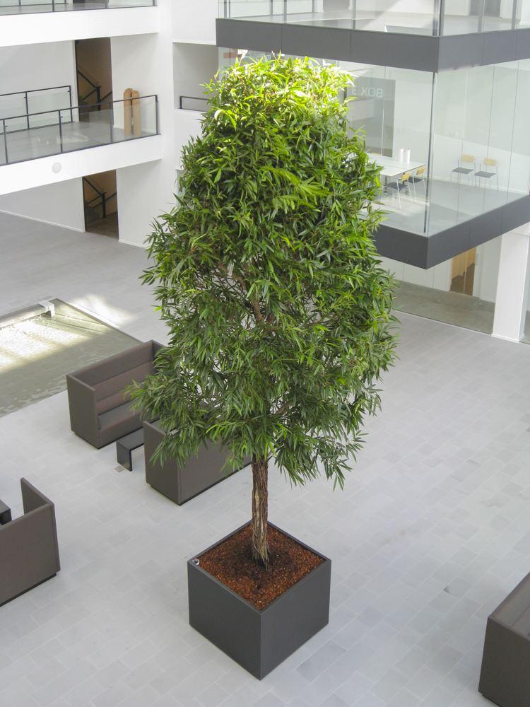 Opstammet træ, stort indendørs træ,