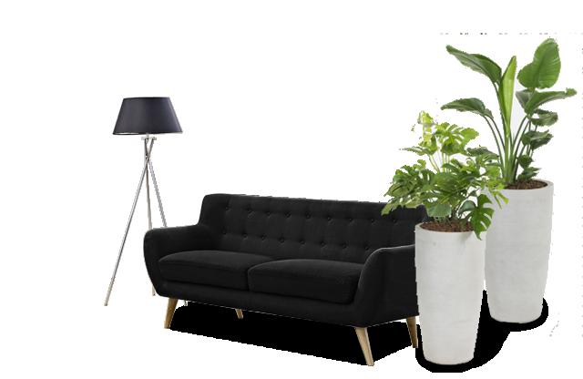køb planter, indendørs planter, kontor planter,