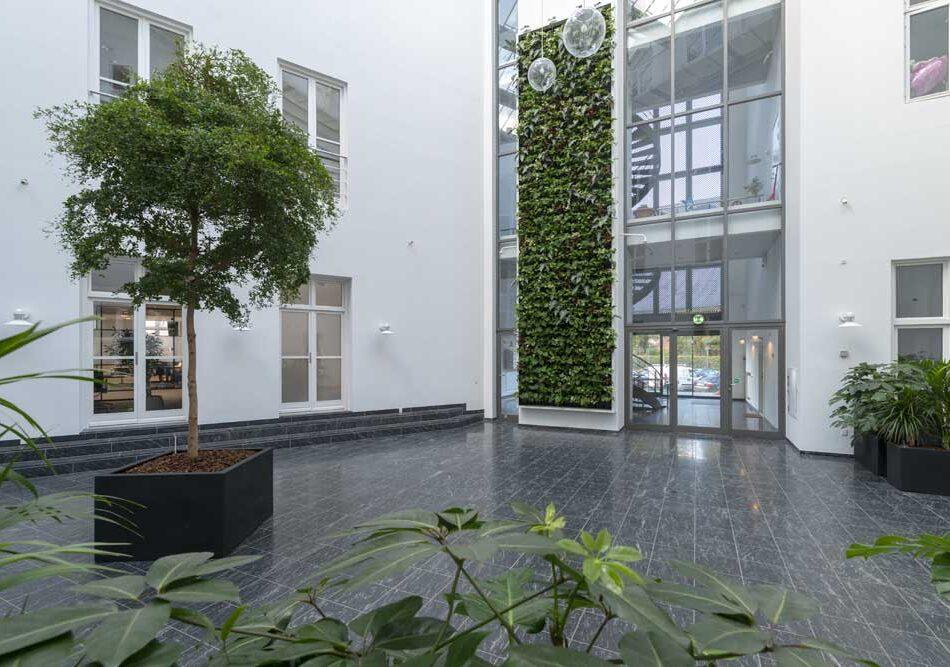 Bucida, Plantevæg, Grønne planter,
