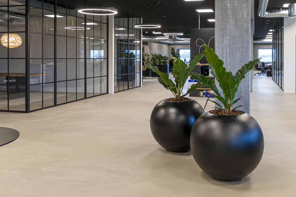 plant care, plant service, runde sorte krukker, Anthurium,