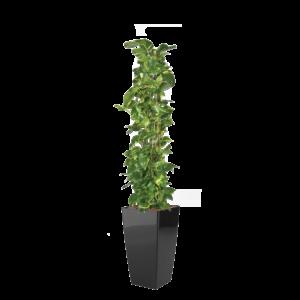 Luftrensende plante Epipremnum,