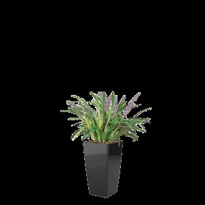 Luftrensende plante Liriope,