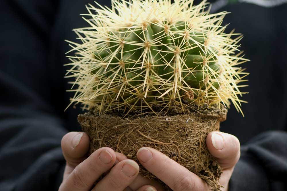 kaktus, plantegaranti,