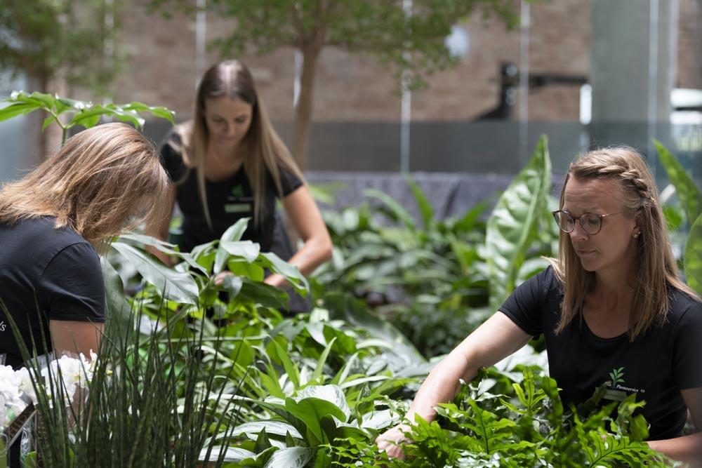 pasning af planter, grønne planter,