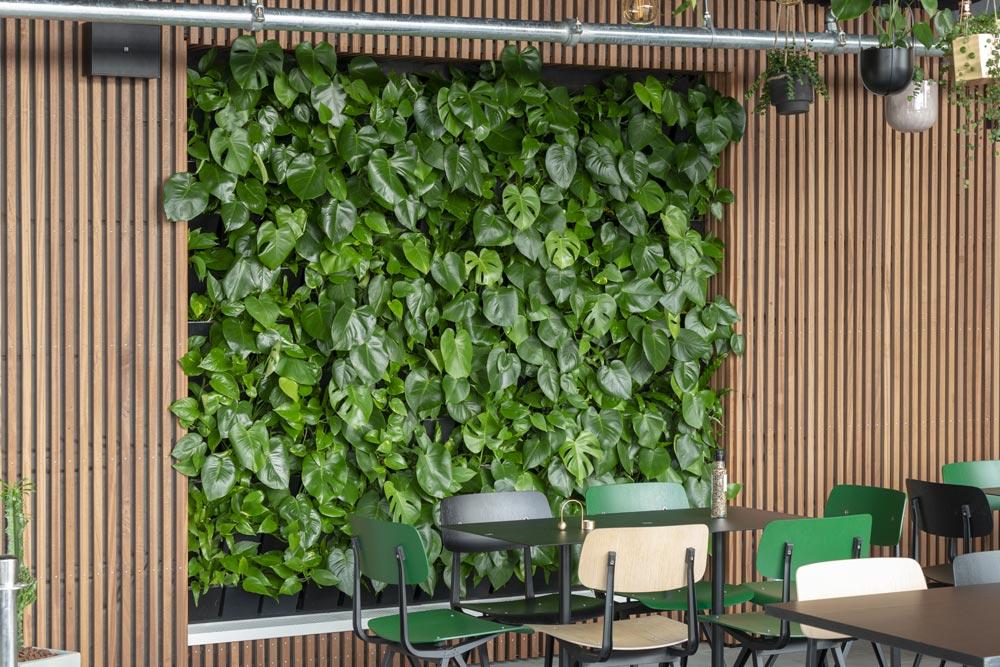 Grønne planter, væg med planter,
