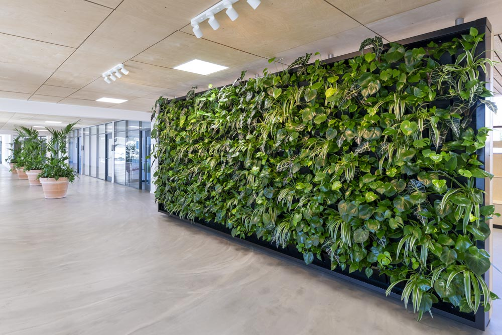 Plantevæg, planter, krukker, kontor,