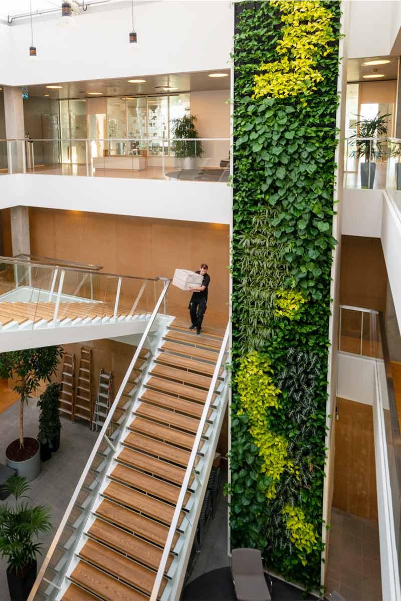 Plantevæg, trappe,