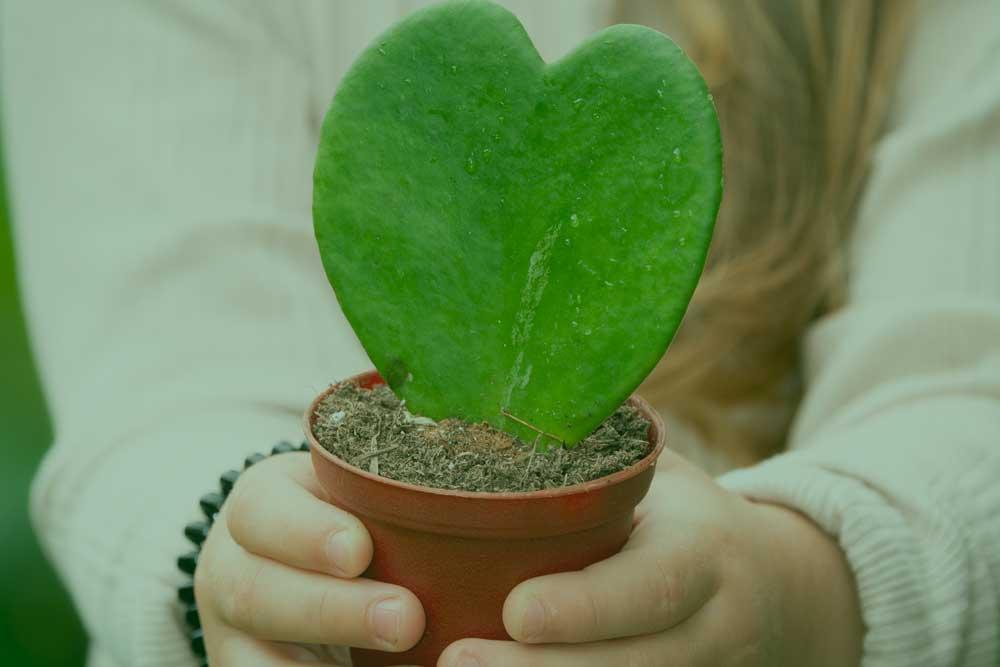 Børnehænder, plante,